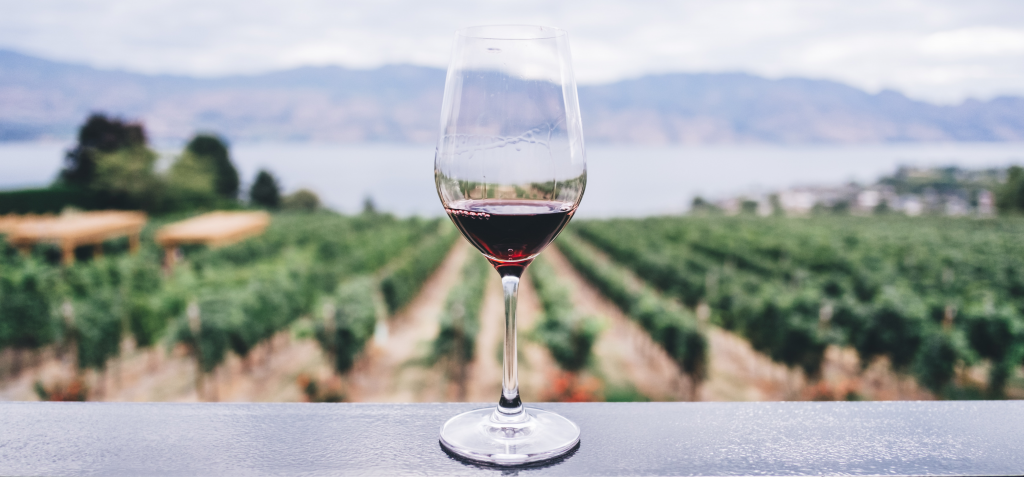 Red wine glass in a vineyard